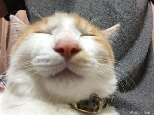 ネコの居る喜びと悲しみ