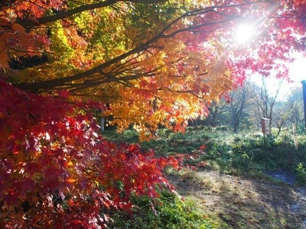 実家の近所の紅葉。