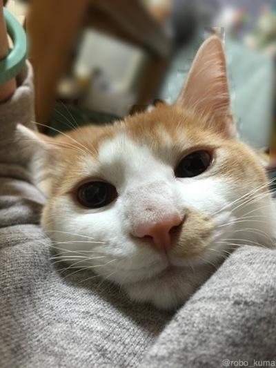 寒いぃ月曜日。猫と添い寝。