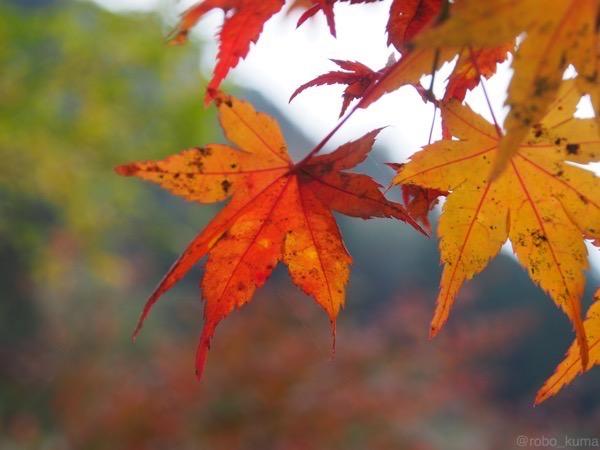 【紅葉を求めて〜】その3。『岳切渓谷』〜『一目八景』