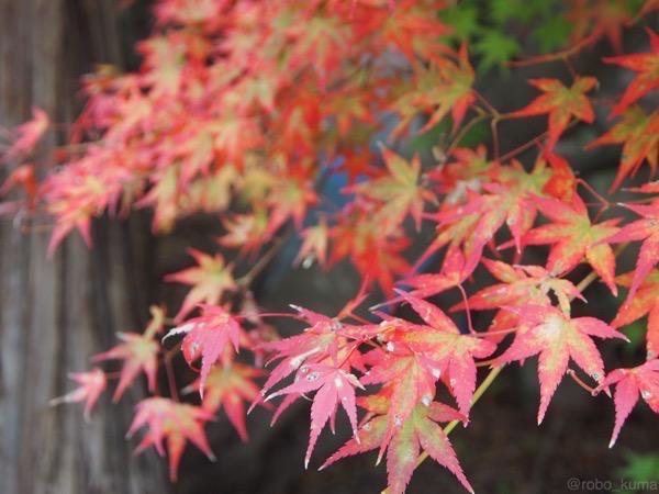 【紅葉見頃です】大分県、『双子寺』へ行きました。
