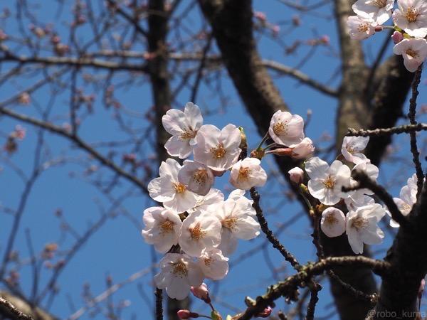 桜、からふる。