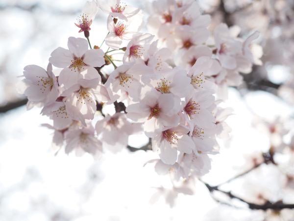 とある晴れた日の春(2015年4月)
