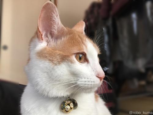 猫と過ごすゴールデンウィーク。