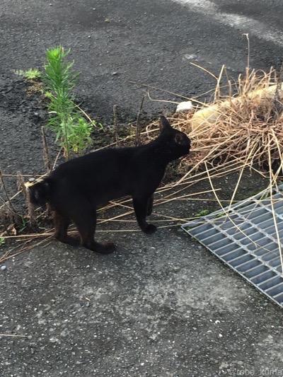 黒猫、追いかけて