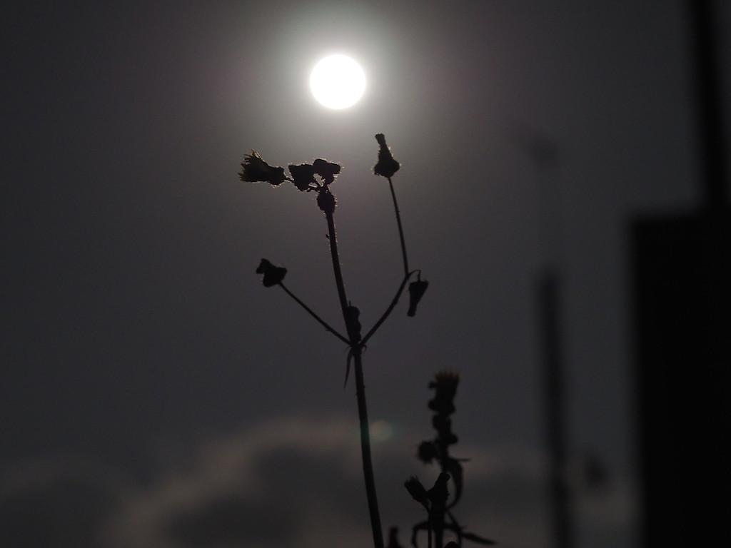 クリスマスに満月。今年最後の満月です(*`・ω・)ゞ