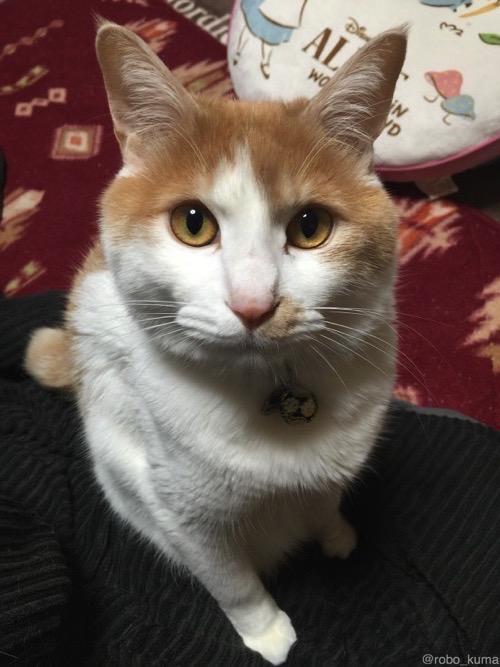 ネコは薬の殻が好き。
