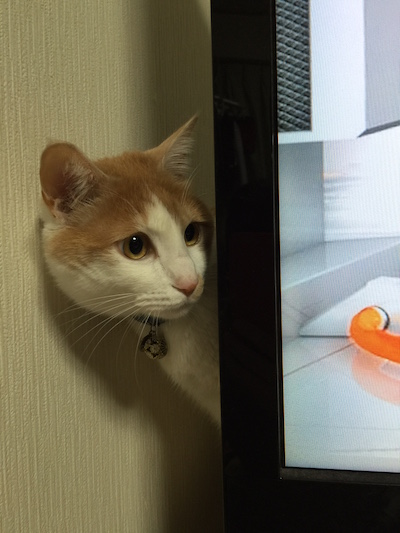 あなたは、なぜテレビの裏に隠れますか?
