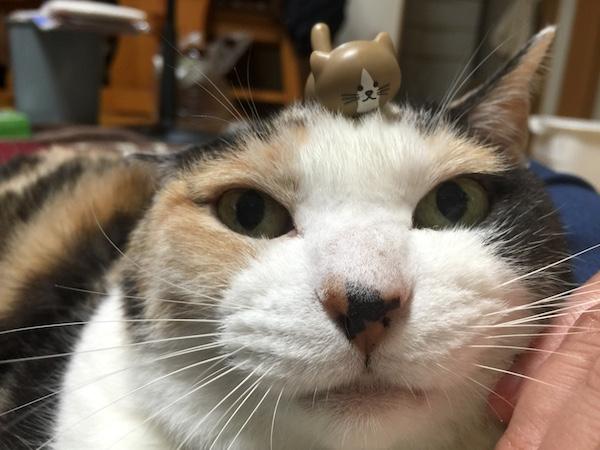 【ねこ】嫁さん曰く「Best Cat of The Year よ!」のうちのネコさん。