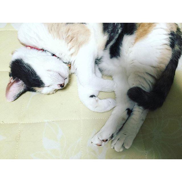 【ぬこ】朝から暑くてツライよね。頑張れネコさん!!