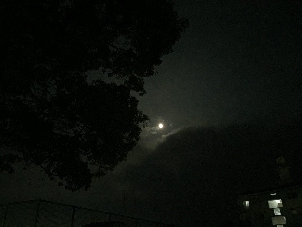 【夜の散歩】月がキレイだぜ!野良猫さんも可愛い( ´艸`)