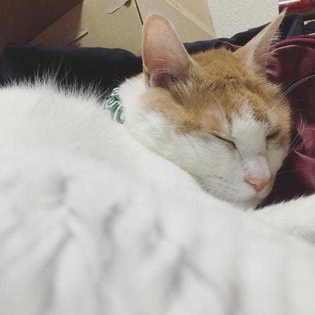 [ねこ] 今日は眠い。