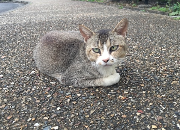 【ねこ】今日の野良猫さん。