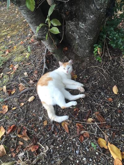 【ねこ】秋のような涼しい日。木の下でお昼寝ネコさん。