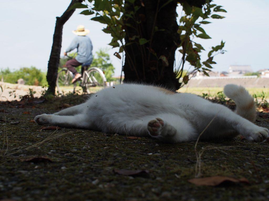 【ねこ】木陰は涼しいけど、まだまだ暑いです。