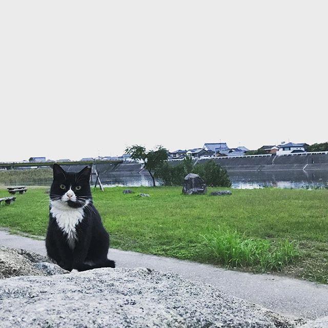 【今日のヌコ】 河原でこんにちは。 #ネコ