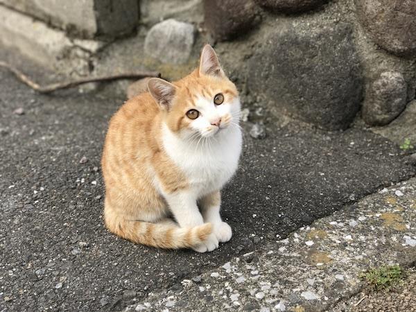 【iPhone 7 Plus】 ポートレートで仔猫を撮影(=ↀωↀ=)。