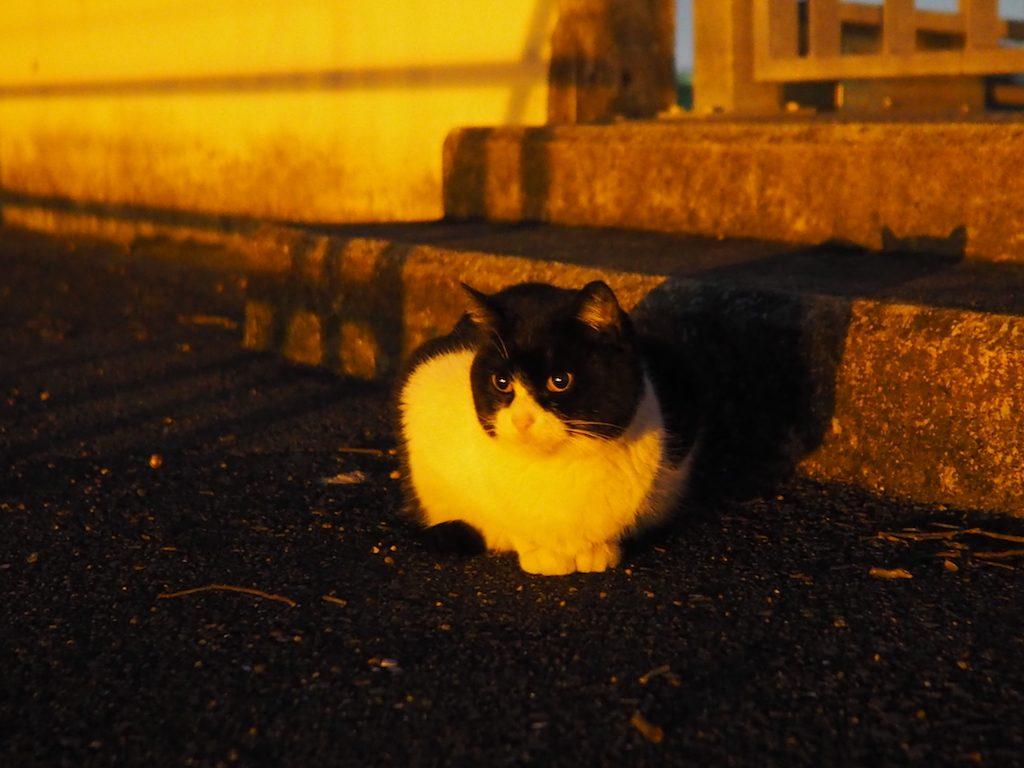 いい肉球の日(*`・ω・)ゞ ネコさんを探して夜の散歩。