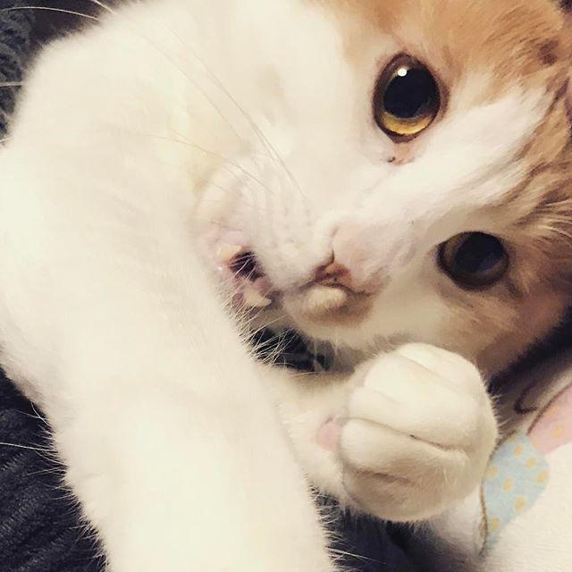 荒ぶるネコさん。