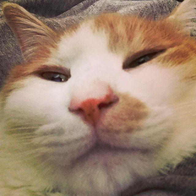 ネコさんと毛布の中で自撮り。寝ぼけてます(-_-)゜zzz…