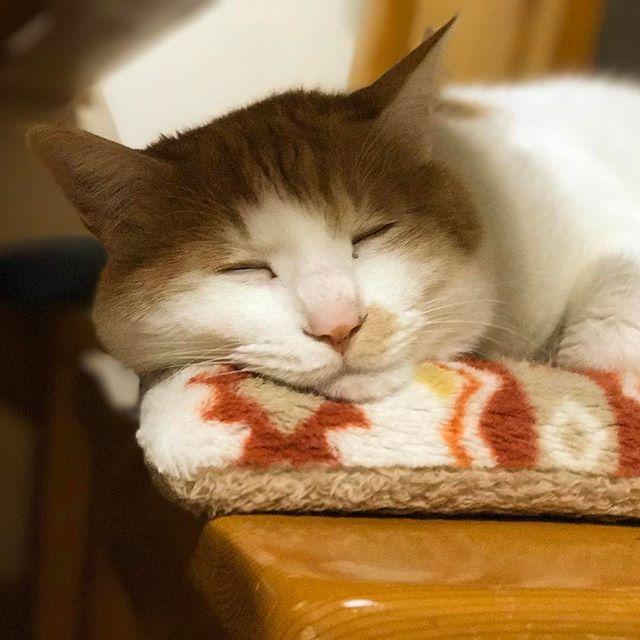 癒しキャット。暖房が一番効くイスの上でお休み中。 (iPhone 7 plusのポートレートにて撮影)