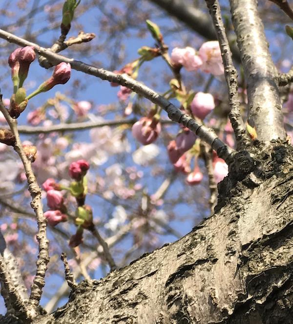 春。新たな門出。
