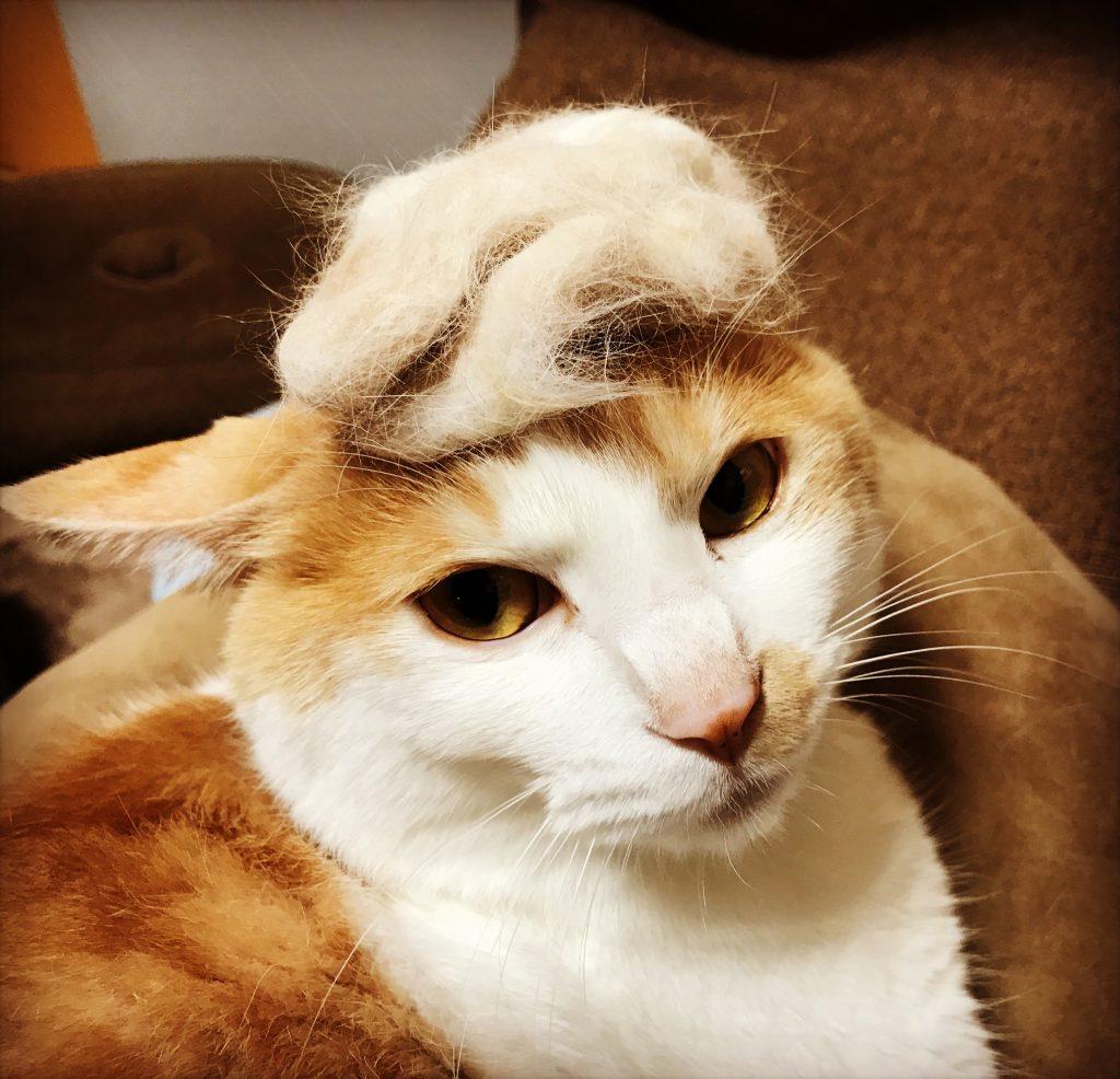 抜け毛で、「どなるど・とにゃんぷ」。
