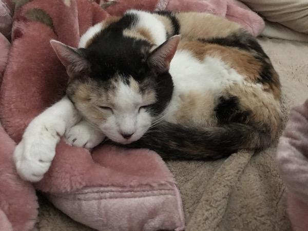 ネコさん17歳です(=^ェ^=)