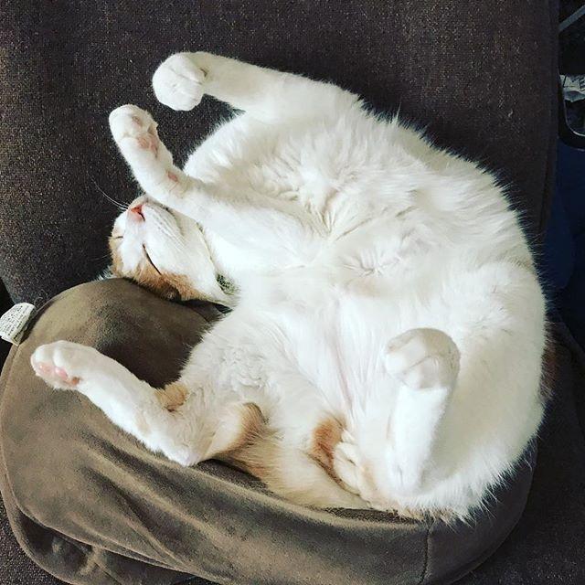 変な格好でも熟睡中です。