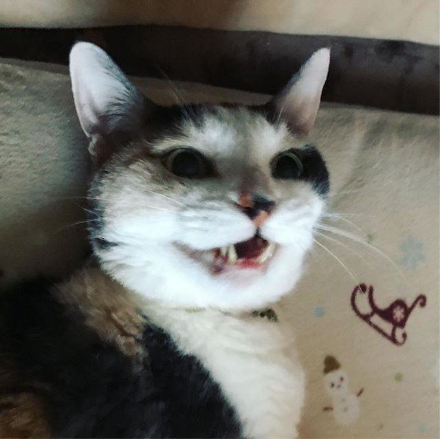 般若猫。コワイ!