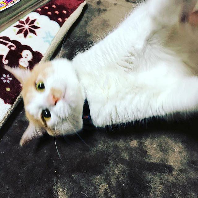 ネコさんと戦闘中(とても危険)。