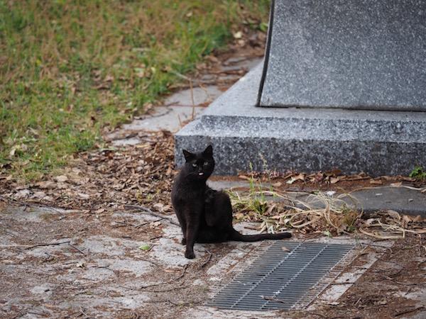 黒猫さんが向かってくる。