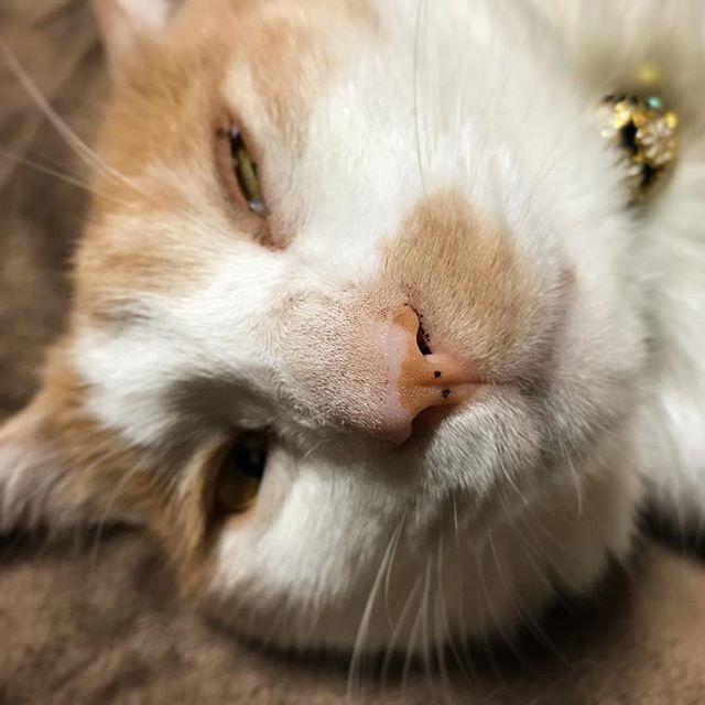 8月8日は、「世界猫の日」。です。