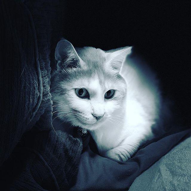 コタツ布団で暖をとるネコさん。なぜに中に入らない? iPhone X ポートレート ステージ照明(モノ)で撮影。