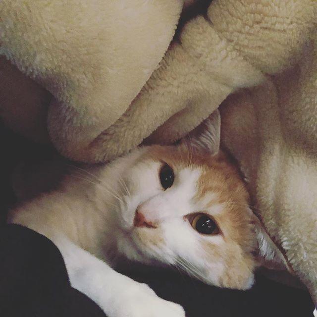 私の布団の中からモフモフが現れた。この時期とても暖かい( ´艸`)。因みに私の腕枕で寝てます(寝返りが打てないのがつらいw)。