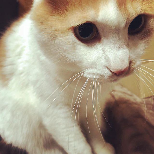 しょんぼり、ネコさん。