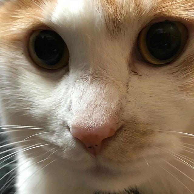 ネコさんのまん丸お目めはキュンとくる。