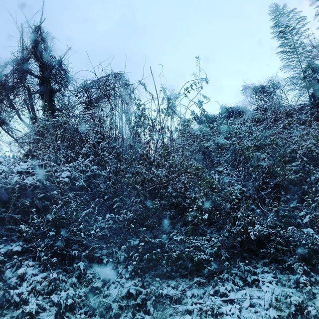 九州ではこれ位の雪でもでも混乱です。やはり冬用タイヤは必要です。