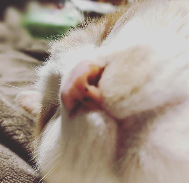 寝るのが仕事。ネコさん。