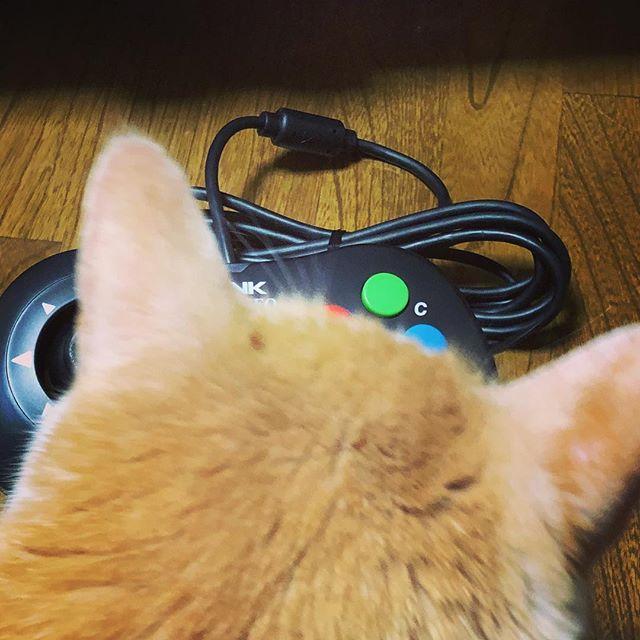 ブログの写真撮影を邪魔するネコさん。