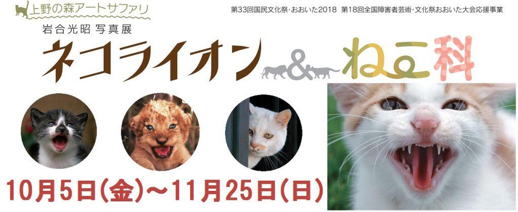 大分市美術館 特別展「上野の森アートサファリ 岩合光昭写真展 ネコライオン&ねこ科」が、2018年10月5日〜25日まで開催です(*`・ω・)ゞ。