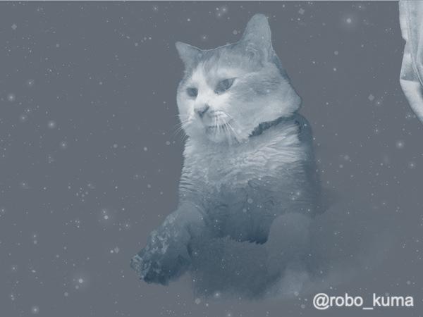 猫の日。2月22日でにゃん、にゃん、にゃんΣ(ΦωΦ)