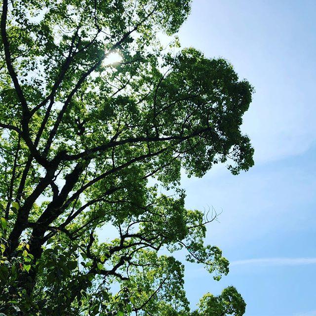 みどりの日。新緑が気持ち良いですね。 #太宰府天満宮
