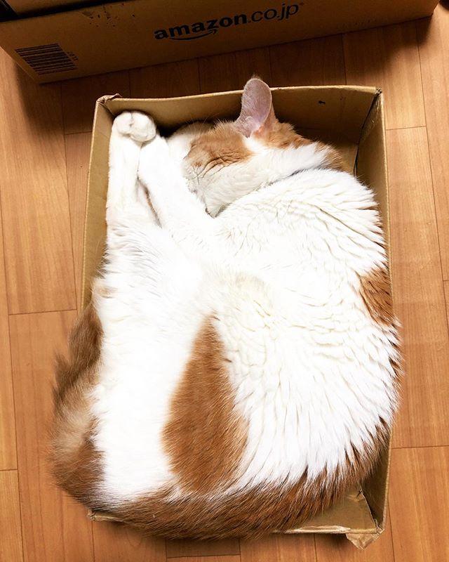 キレイに収納猫。