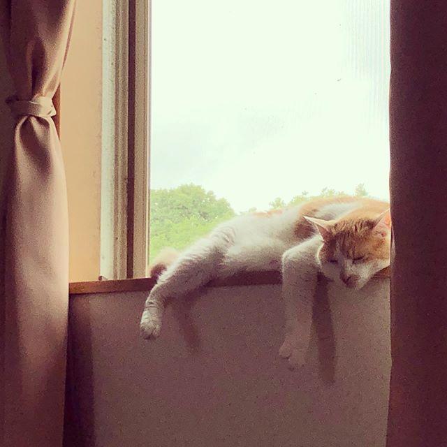 ネコもトロける蒸し暑さ