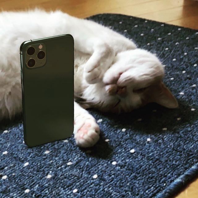 iPhone 11 Pro (AR) とゴロゴロ猫。