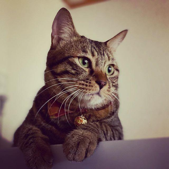 ポートレート猫。(iPhone 11 Pro Max)