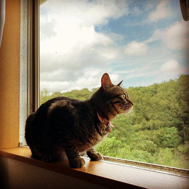 窓際のネコ(iPhone 11 Pro Max)