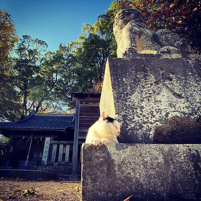 狛犬と猫。(iPhone 11 Pro Max)