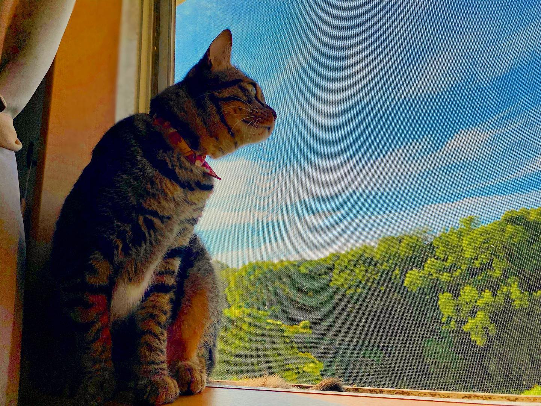 梅雨の晴れ間。ネコさん、青空にこがれて。(iPhone 11 Pro Max)